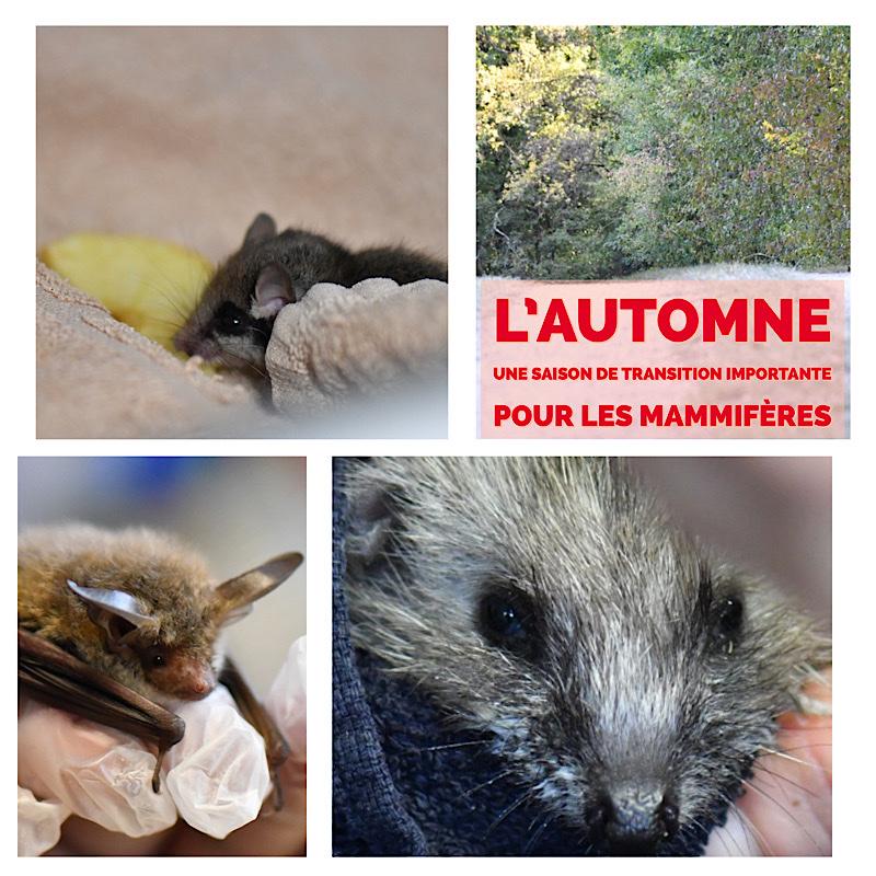 L'automne : une saison de transition importante pour les mammifères