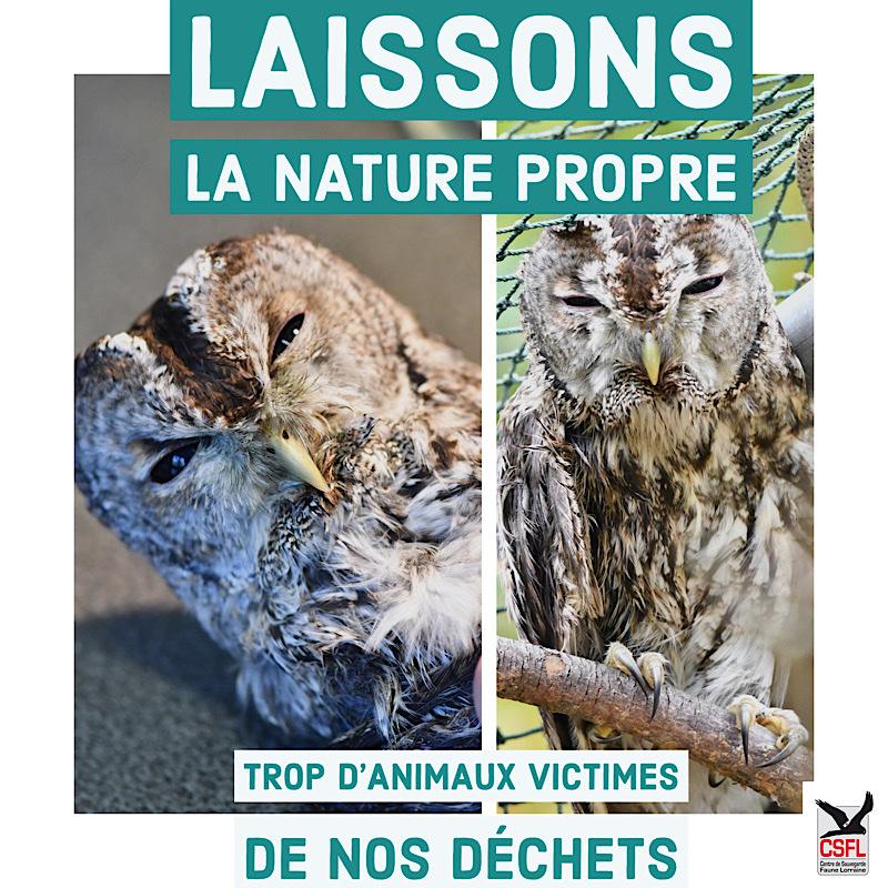 Laissons la nature propre : trop d'animaux victimes de nos déchets