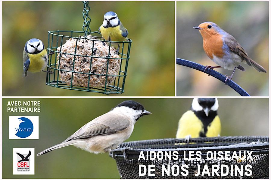 Aidons les oiseaux de nos jardins