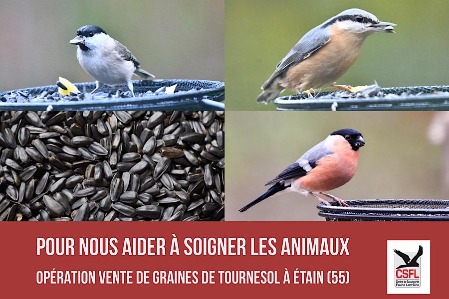 Opération vente de graines de tournesol à Etain (55)