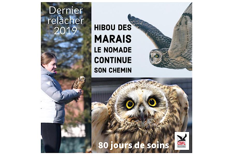 Dernier relâcher 2019 : un Hibou des Marais !