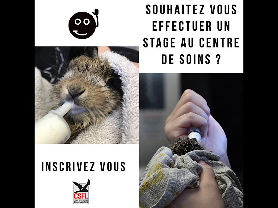 Missions d'écovolontariat : stage de bénévolat animalier