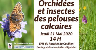 Sortie Orchidées et insectes des pelouses calcaires