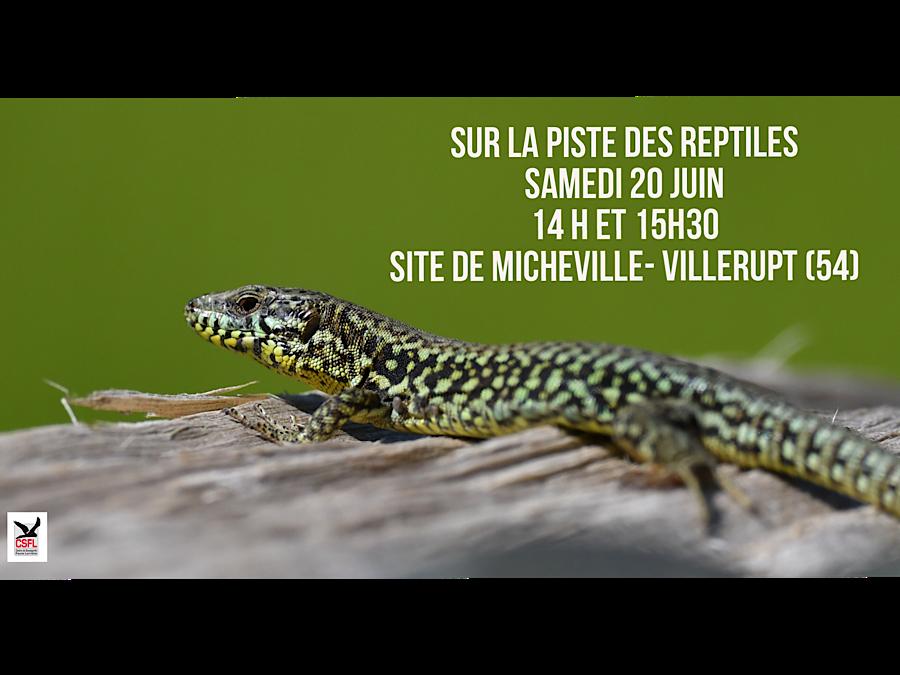 Sortie nature : Sur la piste des reptiles