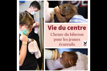 Vie du centre – L'heure du biberon pour les écureuils