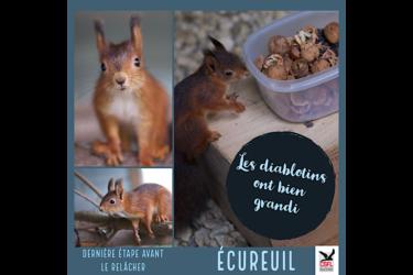 Dernière étape pour les écureuils
