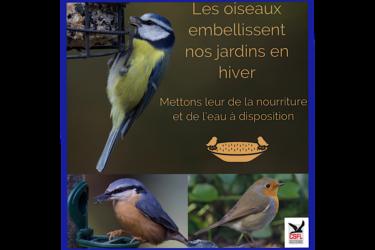 Les oiseaux embellissent nos jardins en hiver