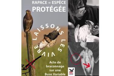 Rapace = espèce protégée
