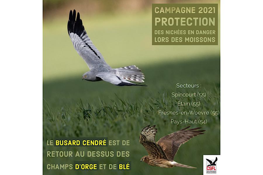 Campagne 2021 : protection des nids en danger lors des moissons